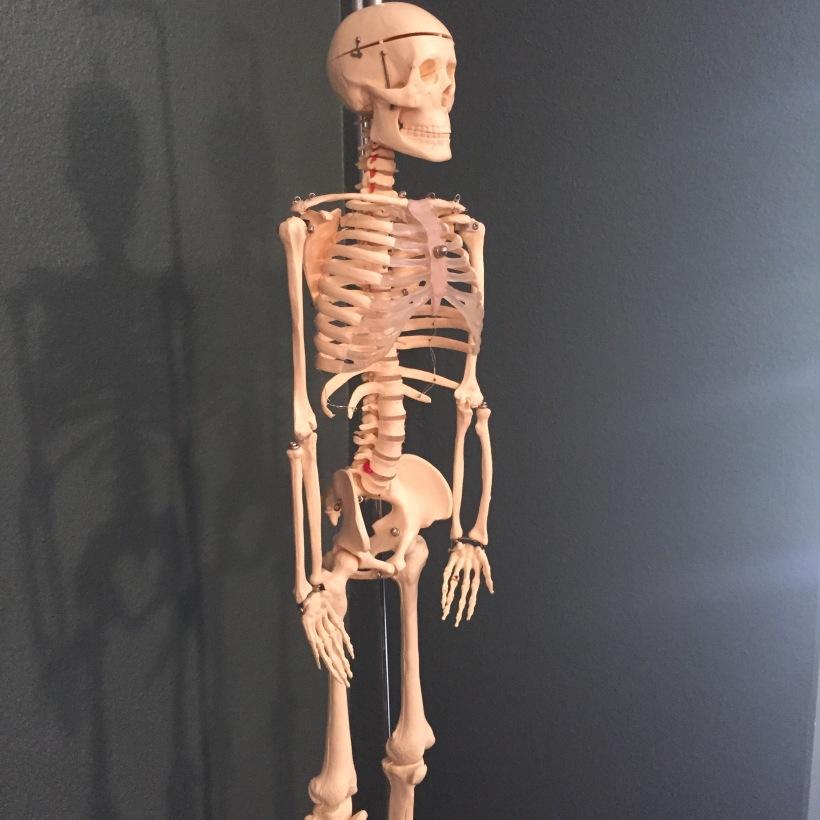 Skeleton Spine