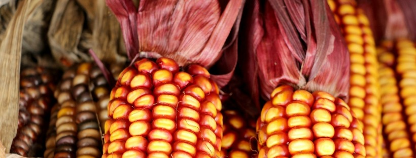 Thanksgiving Corn